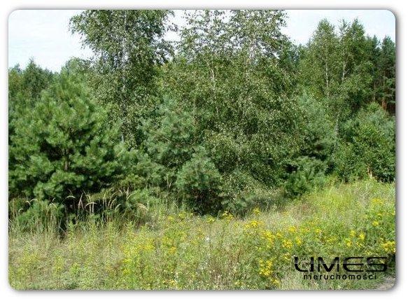 PIĄTKOWA – 104 ar – obszar leśny – 240 zł/ar