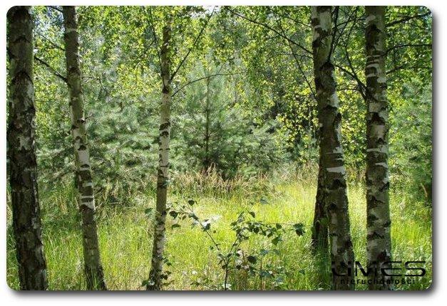 PIĄTKOWA – 800 ar – obszar leśny – 240zł/ar