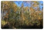 KIELNAROWA – 196 ar – obszar leśny – 510zł/ar