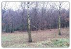 RZESZÓW Leśne Wzgórze – 10 ar – działka budowlana z WZ
